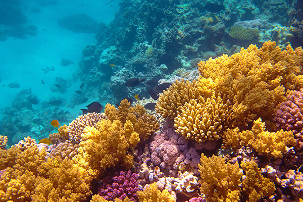 coralreef-conservation