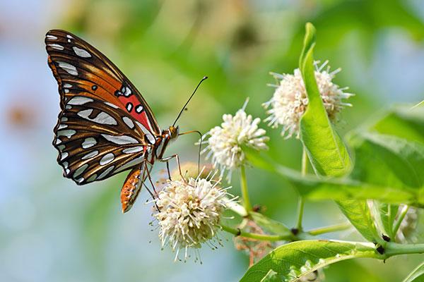 csp-learn-butterflies
