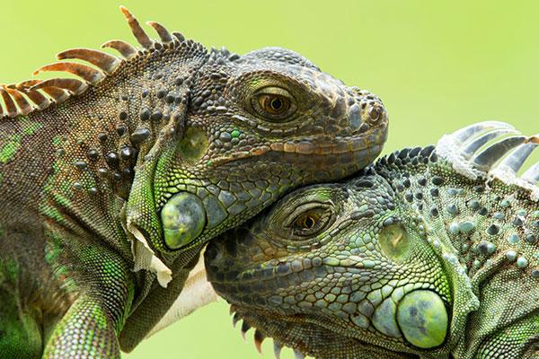 csp-learn-iguanas
