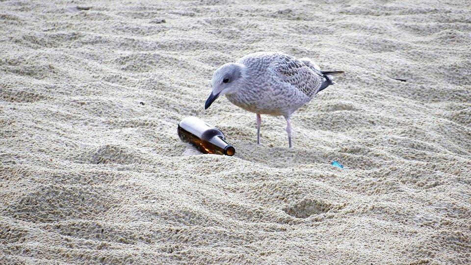 seagull-1943079_960_720