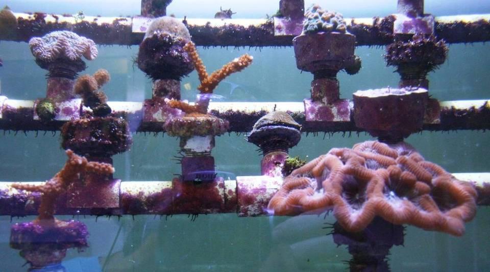IMG_corals-mote-kcw_5_1_H8BG4UOU_L317518387 (1)