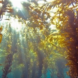 The Eastern Caribbean Is Swamped by a Surge of Seaweed | Key