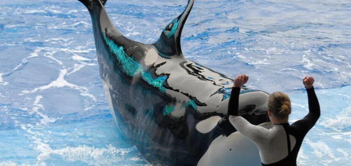 SeaWorld Death