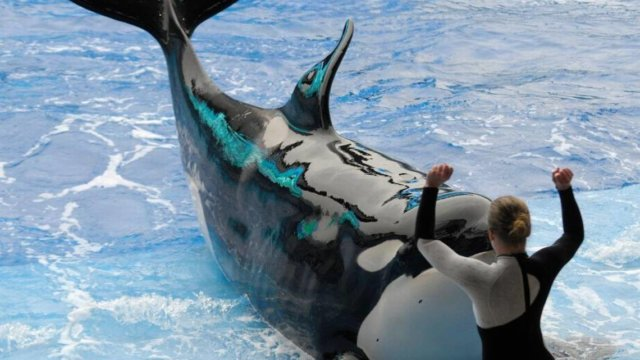 SeaWorld Death