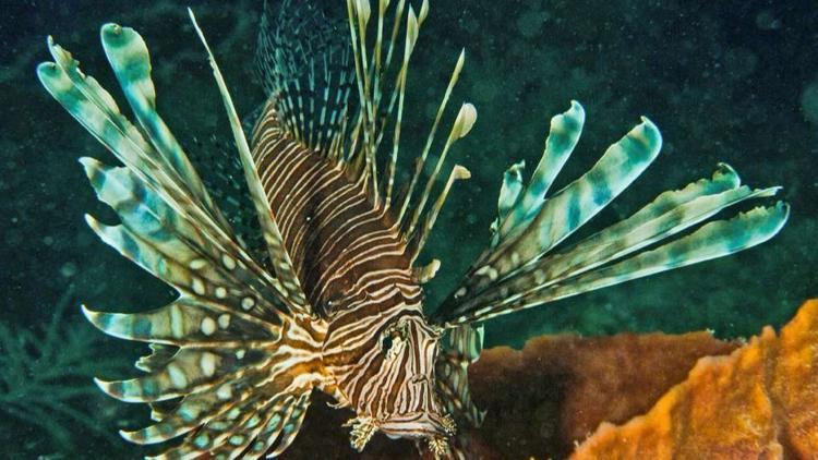 Invasive species key biscayne citizen scientist 39 s project for Invasive fish in florida