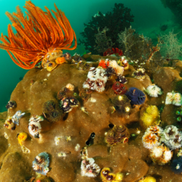 Homegrown Coral Reefs Are Beautiful And Potentially Dangerous Key Biscayne Citizen Scientist Project