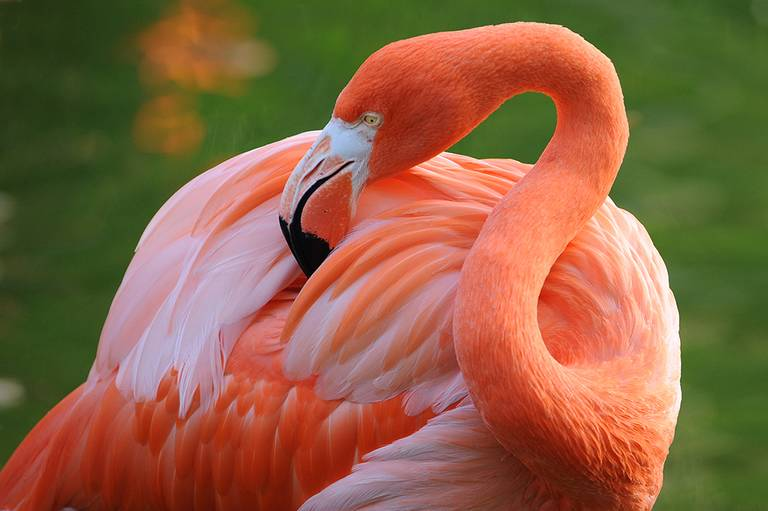 Now That We Agree These Flamingos Are Florida Natives It S Time To Protect Them Experts Say Key Biscayne Citizen Scientist Project