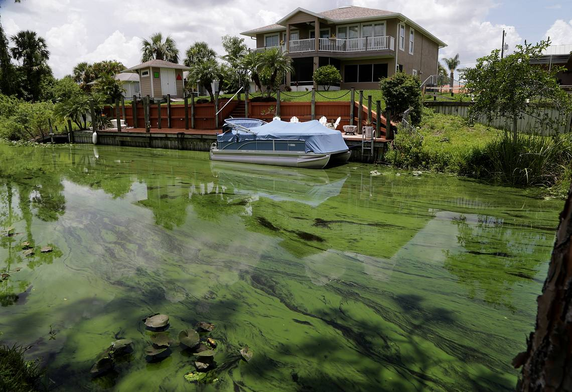 Massive and toxic algae bloom threatens Florida coasts with another